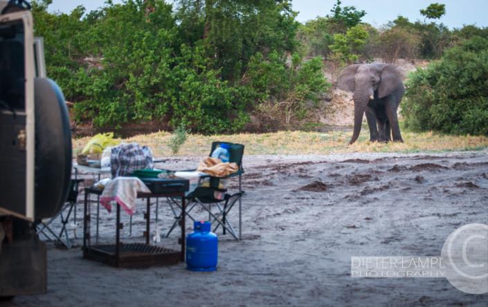Reisefotografie durch Achtsamkeit: Chobe Botswana